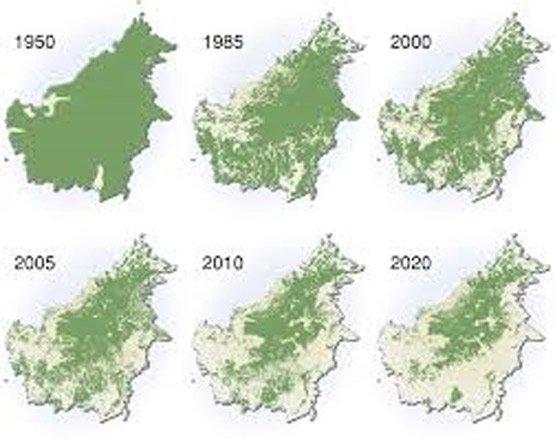 Kondisi Hutan Kalimantan
